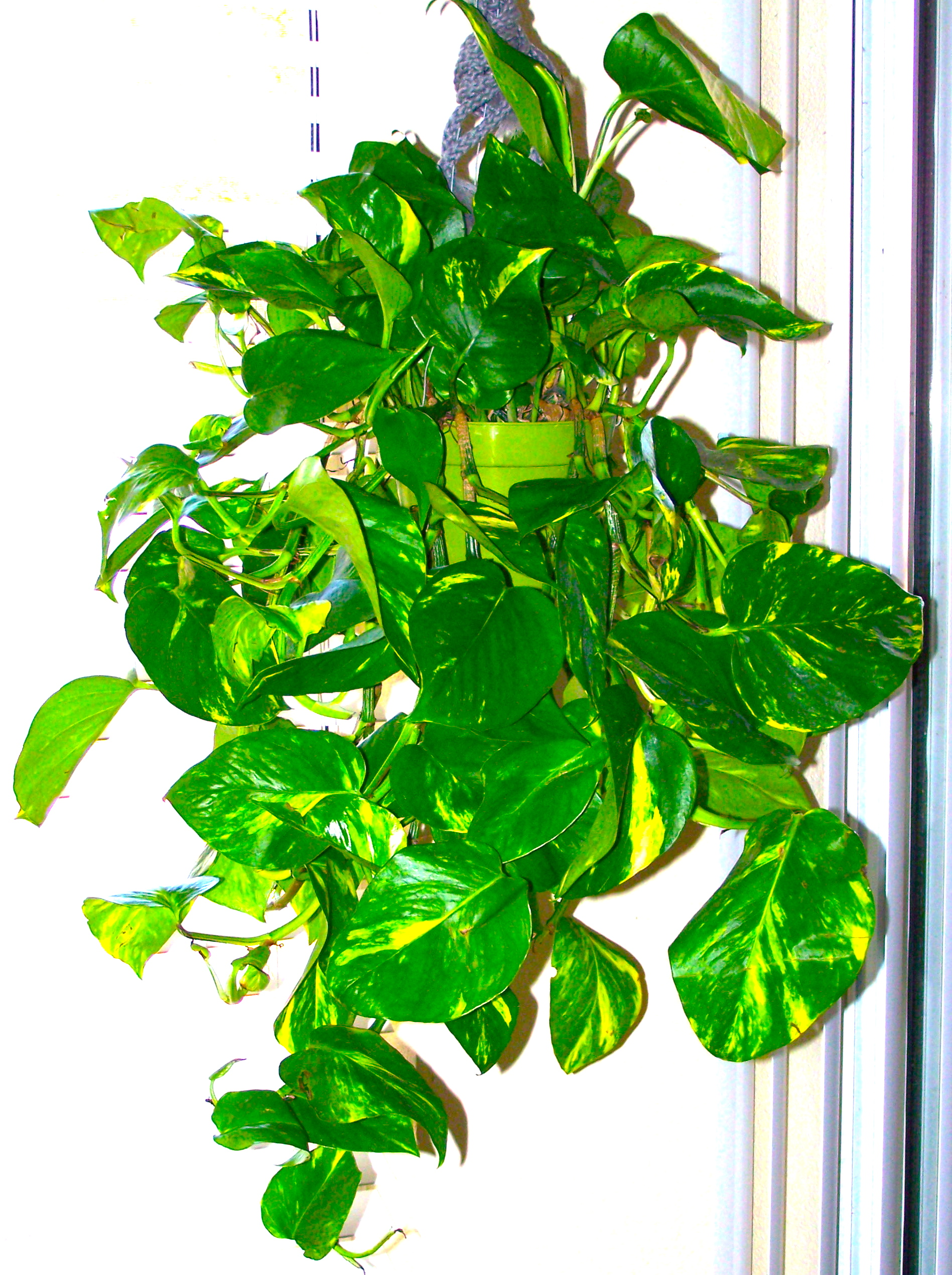 Positive Health Benefits Of Indoor Plants Amp Flowers
