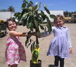 You Need An Avocado Tree! | AttractingWellness.net